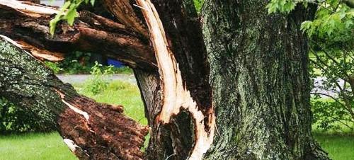 Beteg fák a kertben? Egyszerűen megszabadulhat tőlük!